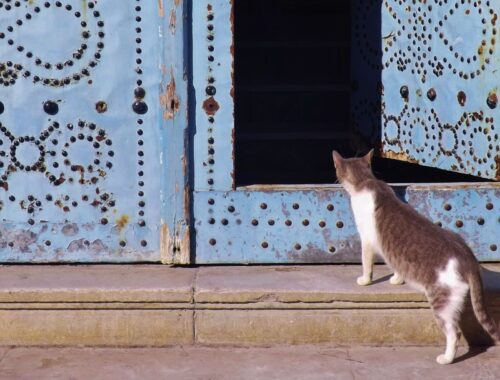 A cat looking through an open door.